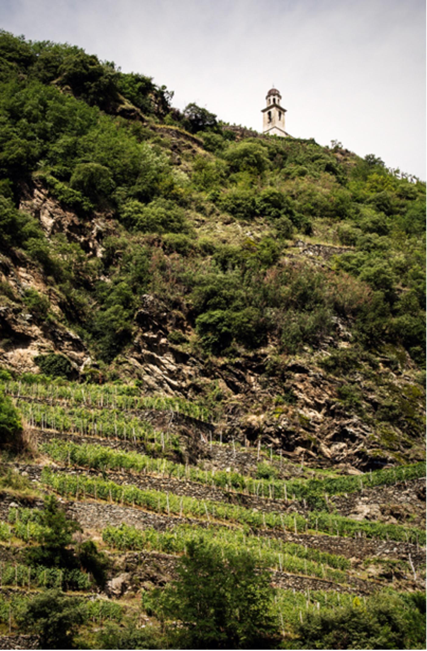 Courtesy of Consorzio dei Vini di Valtellina