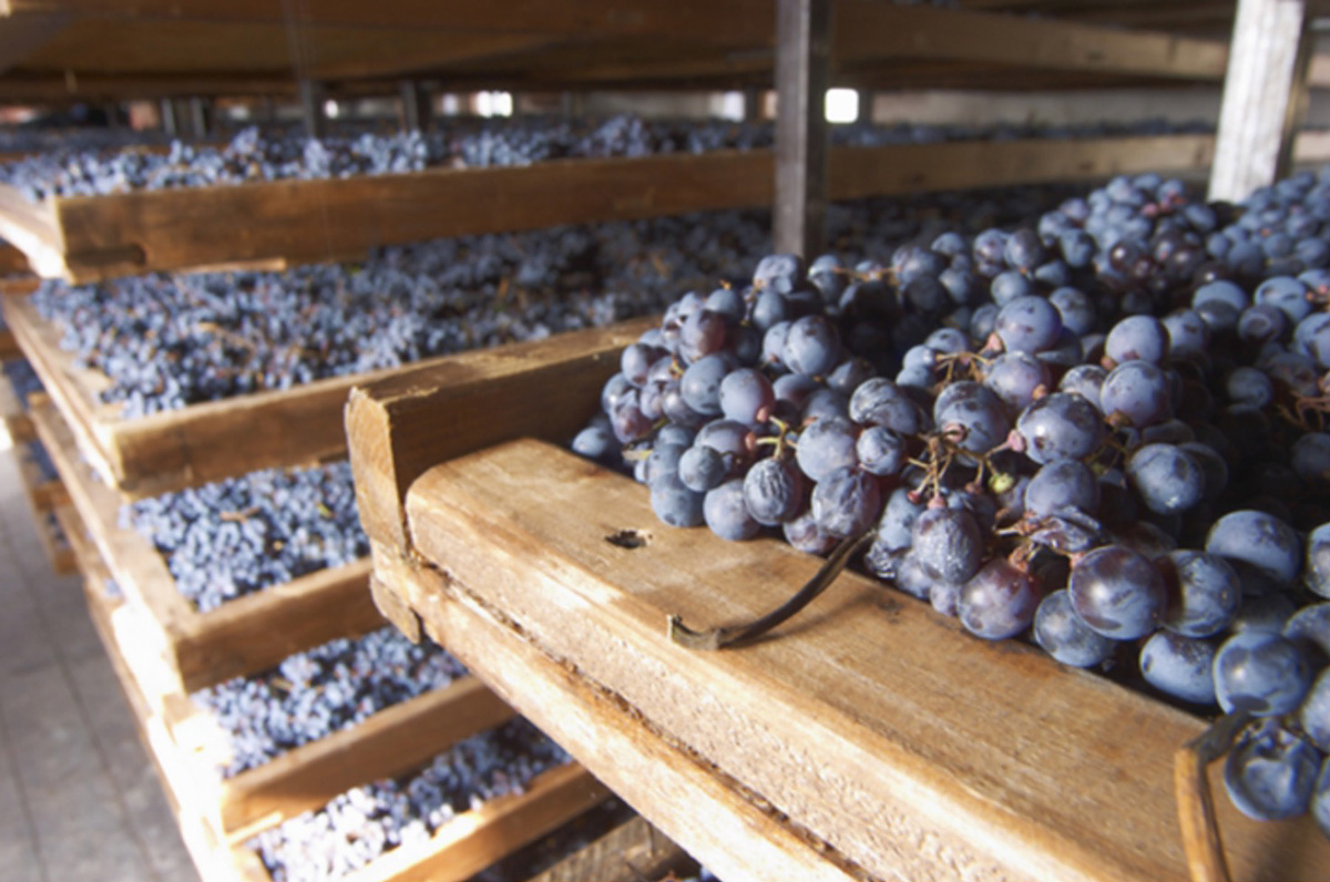 Grapes during the Appassimento. Photo courtesy of Terroir Amarone