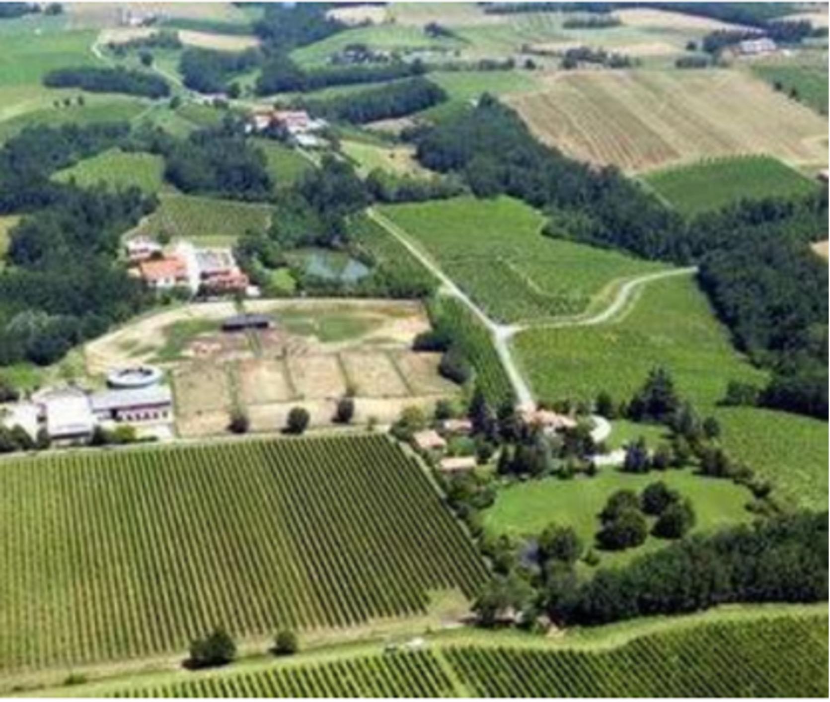 Oltrepo Vineyards. Photo by Tenute Tonalini