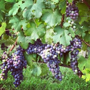 i 300x300 - 6 Reasons to Book a Private Wine Tour with Vinotalia