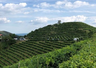 mountains-and-vines-2