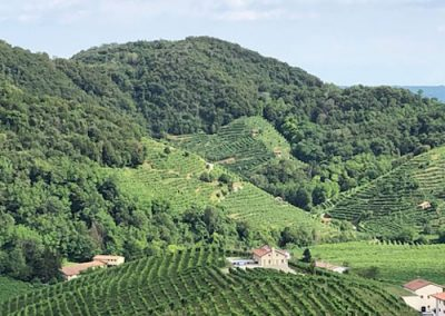 mountains-and-vines