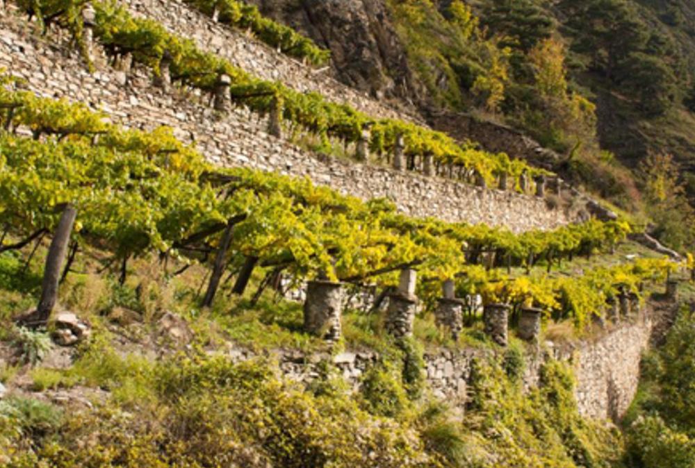 Terraced Vineyards by alamy.com